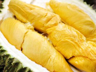 prospek budidaya durian musangking